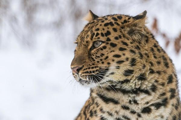 © Ola Jennersten / WWF-Sweden