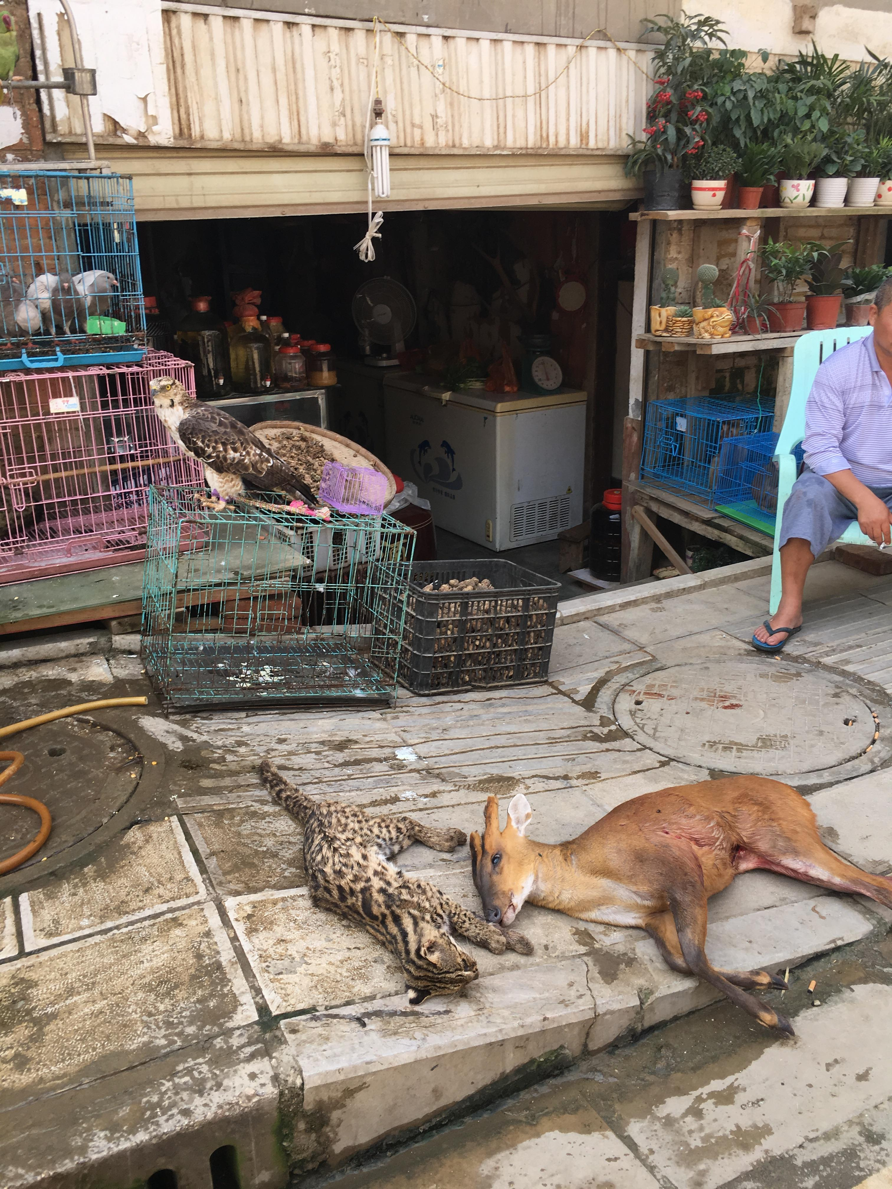 Wildlife for sale at a market in Mong La, Golden Triangle © WWF-Myanmar