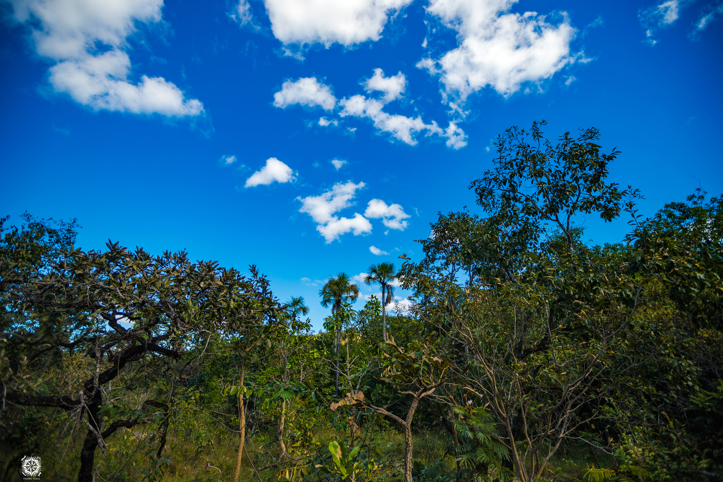 Typical Cerrado biome trees seen in Pirenópolis, Goiás, Brazil.